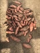 Sweet potato D's Harvest